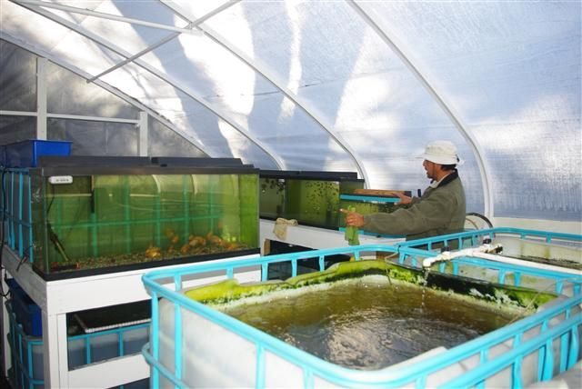 12 best aquaponics images on pinterest aquaponics for Fish farming at home