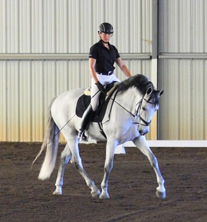 Best  Horses For Lease Ideas On   Horse Quotes