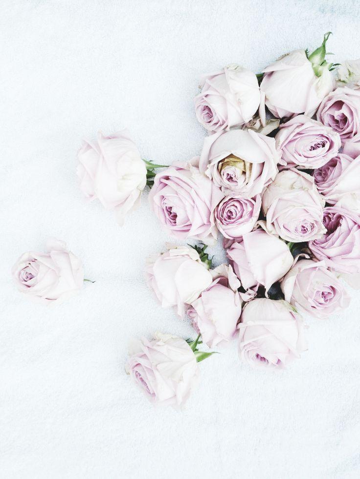 prettiest pale purple roses <3
