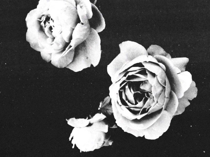 Umberto Eco- Numele Trandafirului