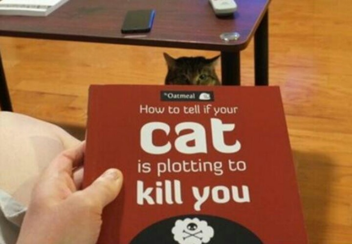how to tell if your cat is stimulated