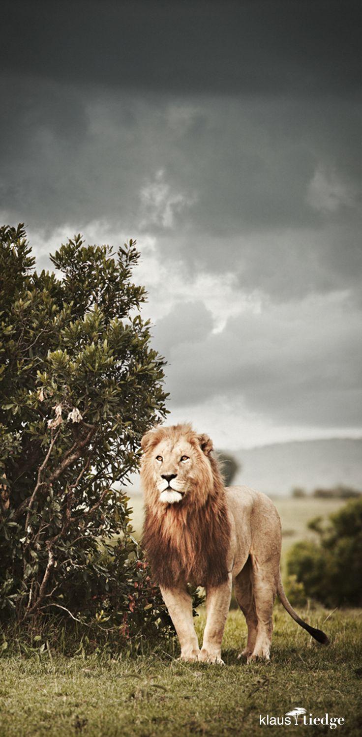 20 best A wie Afrika images on Pinterest | Fine art photography ...
