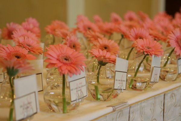 escort cards: Wedding Inspiration, Placecard, Gerber Daisies, Wedding Ideas, Place Cards, Escort Card, Weddings, Wedding Flowers, Gerbera