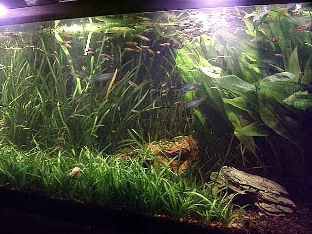 eb4a3f9bf7c3f7d390a59ab64f6af8c1--aquari