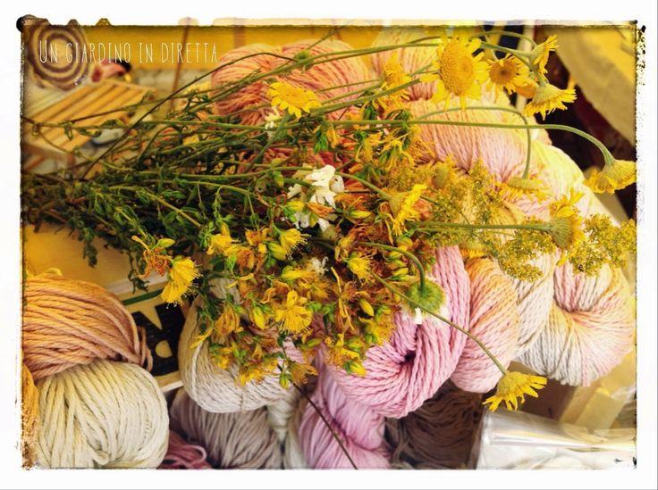 Nuovo Post Un Giardino In Diretta: Le piante tintorie: colorare filati e tessuti con la natura! #piante #tintura #lana #seta #fiori