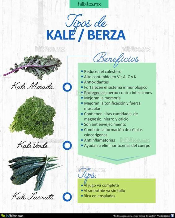 3 tipos de KALE O BERZA