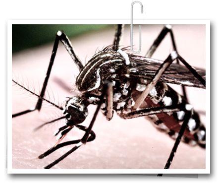 Tudo sobre o Zika - Fato Online