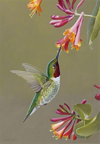 Männlicher Rubin-Throated Kolibri auf Geißblatt, Vogel-Ölgemälde durch Camil…