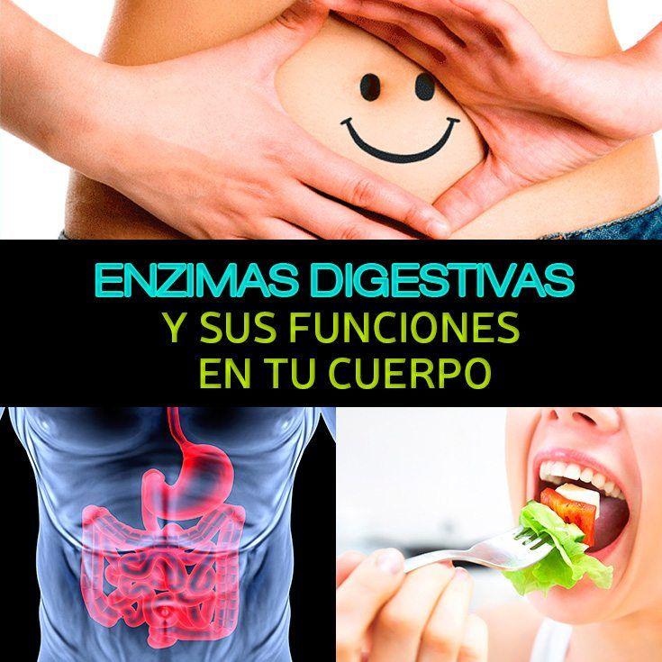 Las enzimas digestivas son las responsables de digerir todos los alimentos que consumes y se encuentran en tu boca, estómago, intestinos, páncreas e hígado.