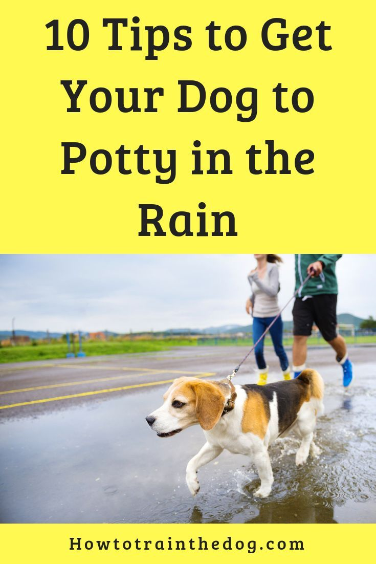 How To Get Your Dog To Use The Bathroom Outside Training Your Dog Dog Training Your Dog