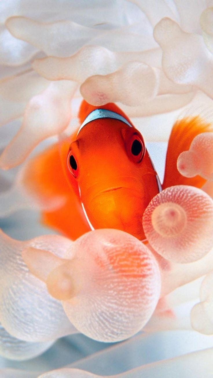 Nice Gold Fish Nemo Orange Sea Smartphone Wallpaper and Lockscreen HD 7