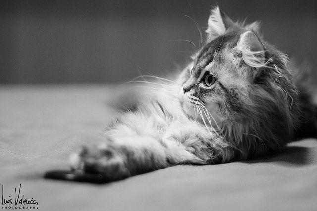 Gaspar II   Flickr - Photo Sharing!