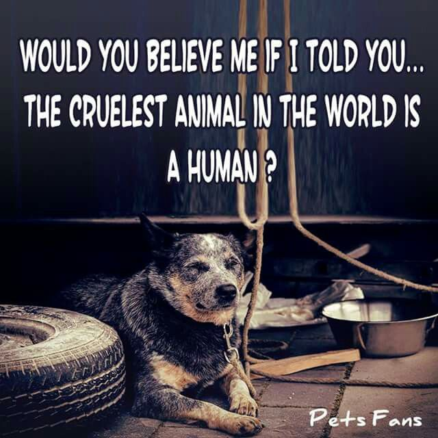 This is too true. We murder,abuse,and more. Not just to other humans. Animals too