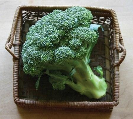 how to cut broccoli off plant