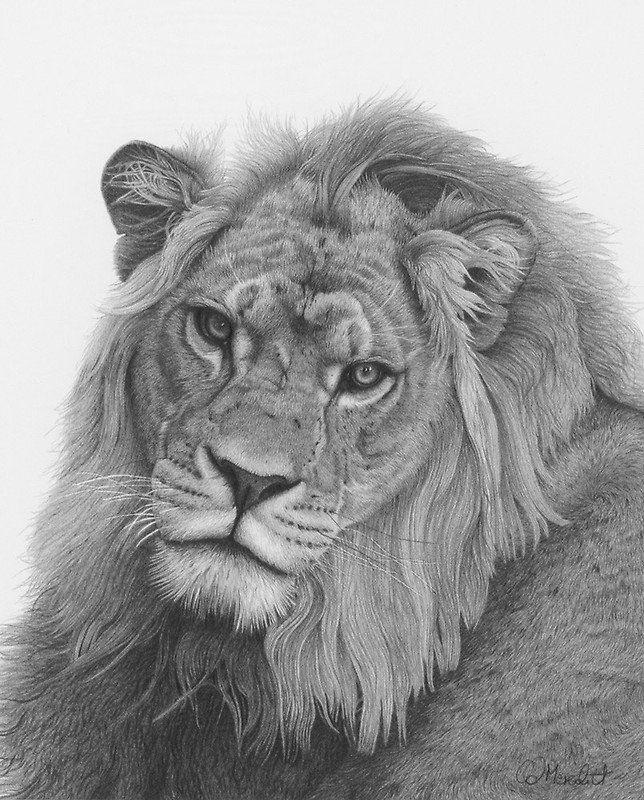 Фотореалистичные графитовые рисунки животных