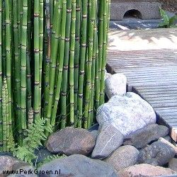 This would be the perfect thing to do in front of the bamboo!