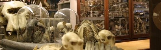 Grant Museum of Zoology, visit it!