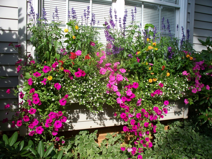 This is my window box, summer 2011- it's a new playground every year!