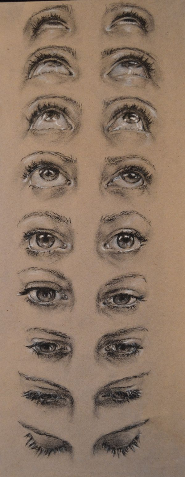 Human anatomy studies references - Eyes