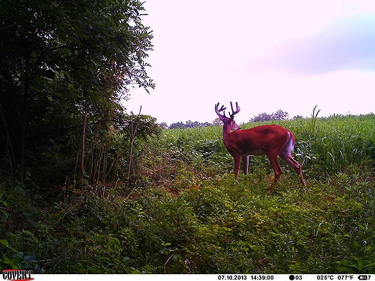 Tried and Proven Early Season Bow Hunting Tips   365 Whitetail. Great article!