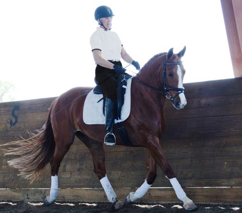 Breaking and Training the Stock Horse and Teaching Basic Principles of Dressage