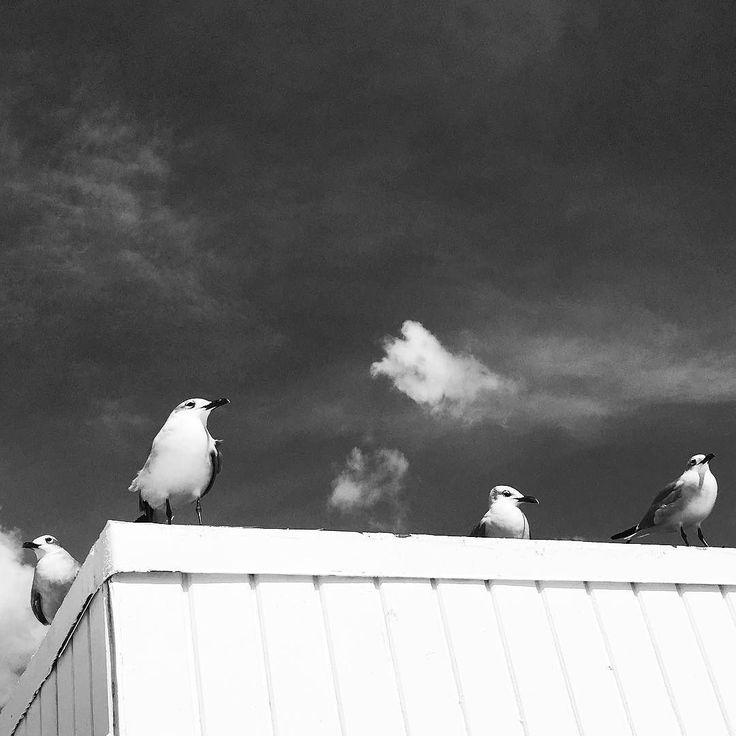 #birds #posing #monochrome #beach #miami #bw #bnw #blackandwhite #blackandwhitephotography #grayscale #blackwhitephotography #ig_bw #minimalist #minimal #nature #naturelovers