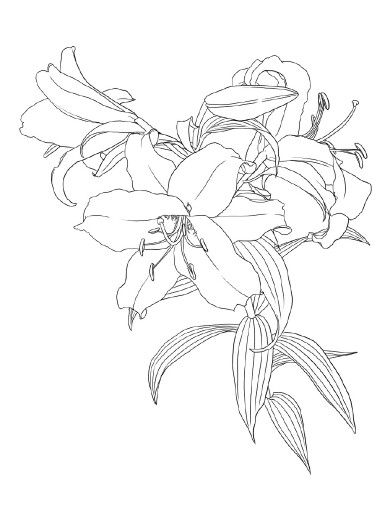 I would love to paint giant lilies all over my hallways in white.