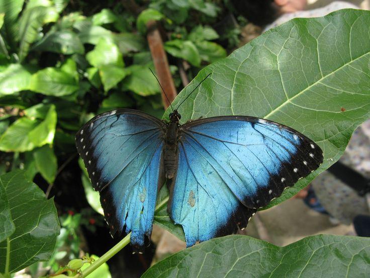 2015 casa delle farfalle e il bosco delle fate - butterfly arc and