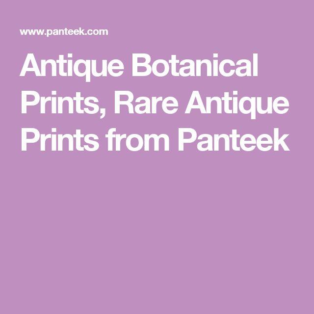 Antique Botanical Prints, Rare Antique Prints from Panteek