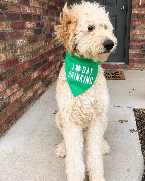5ae6cc8743ab St Patrick's Day Drinking Bandana | dog gets festive | St patrick ...