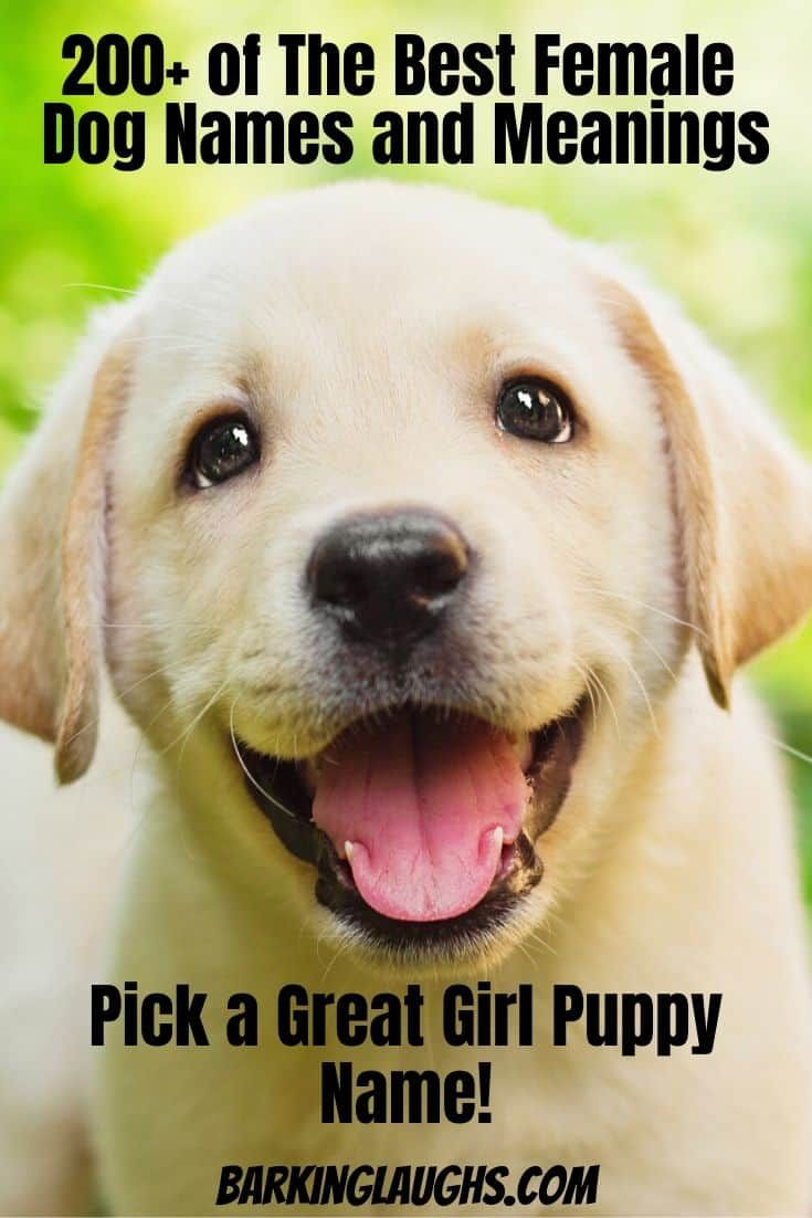 Female Dog Names And Meanings With Images Best Female Dog