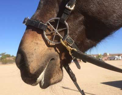 Bridles and Reins | Equine Superstore