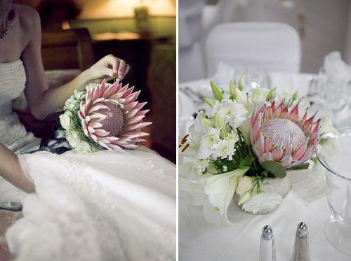 Google Image Result for http://blog.celebration.co.za/wp-content/uploads/2012/04/protea-weddings.jpg