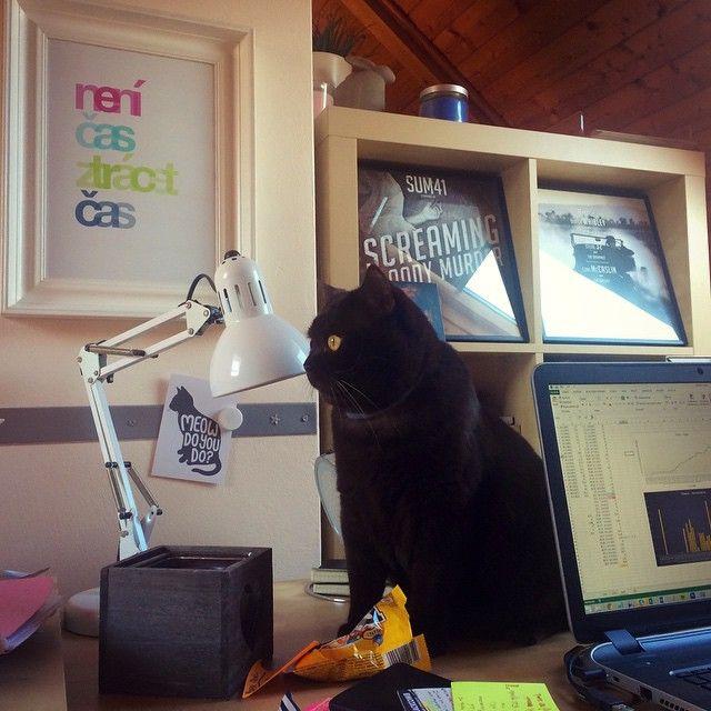 Jedno heslo, které je pravdou pravdoucí a vždycky bude. Nemáme moc času, ale pořád si to úplně neuvědomujeme. Každá minuta je strašně drahá. #plakát #motivace #inspirace #dekorace #bydlení #pracovna #stůl #typografie #kočka #poster #motivation #decor #homeoffice #table #typography #cat