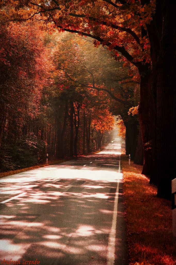 Autumn Scene, The Roads, Fall Leaves, Country Roads, Seasons Autumn, Beautiful Places, Favorite Seasons, Autumn Beautiful, Autumn Colors