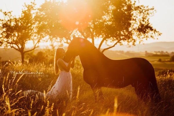 Shooting im Sonnenuntergang, Pferdeshooting, Friese, Mambo, Mambo und Jenny,