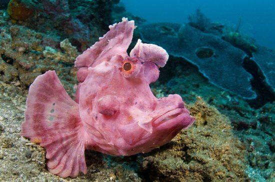 peces raros