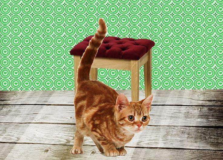 Katten / poezen: voor