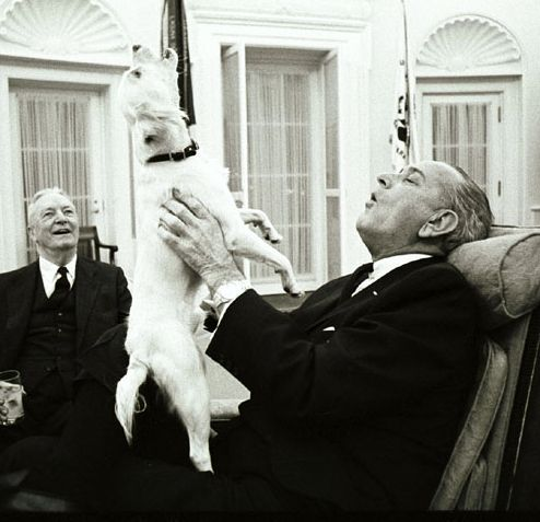 Yuki and Lyndon B. Johnson share a tender moment in the Oval Office: | The 42 Best Photos Ever Taken Of White House Pets
