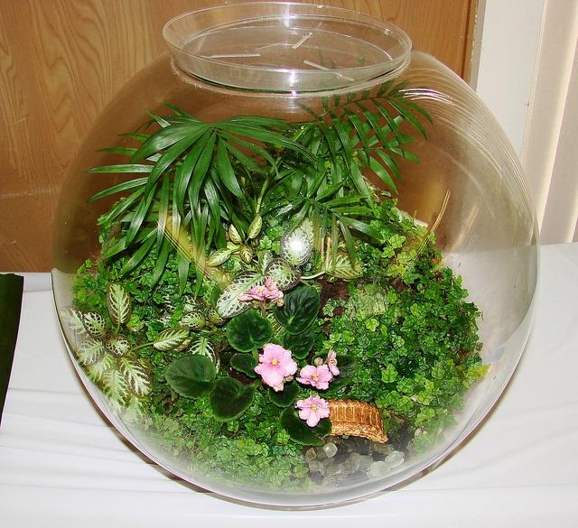135 best images about indoor gardening on pinterest jars for Indoor gardening glasses