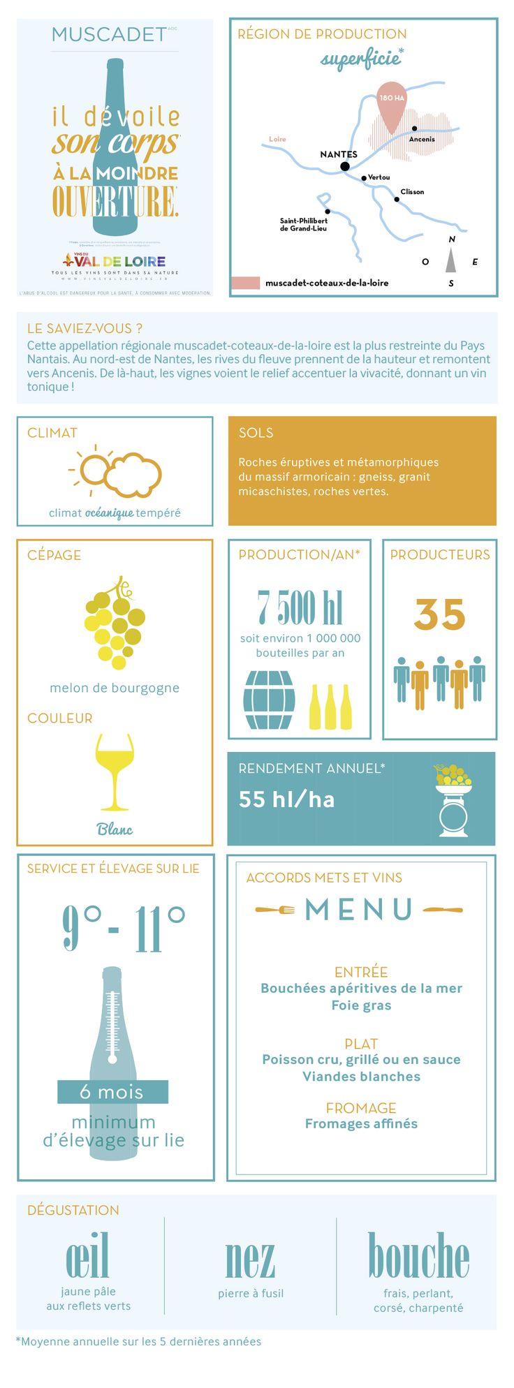 Fiche illustrée du Muscadet Coteaux de Loire, son cépage, sa production, sa dégustation...