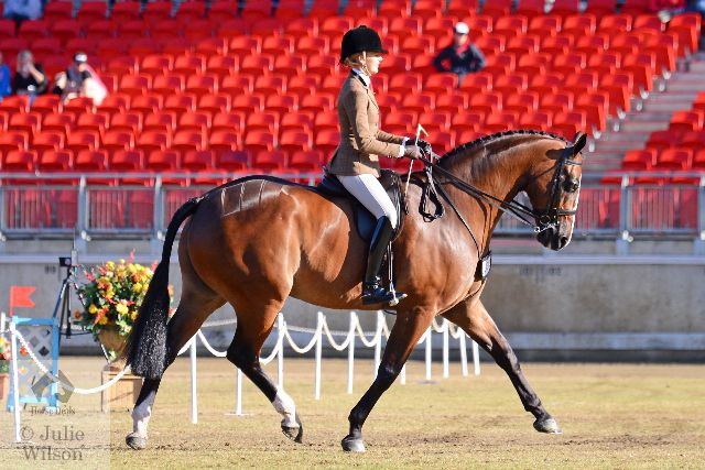Ali Berwick certainly makes a beautifully elegant picture aboard her own, Rebecca Crane and Billy Raymont's outstanding nomination, the Fisherman's Friend gelding, 'France' on their way to victory in the class for Open Show Hunter Over 16.2hh.