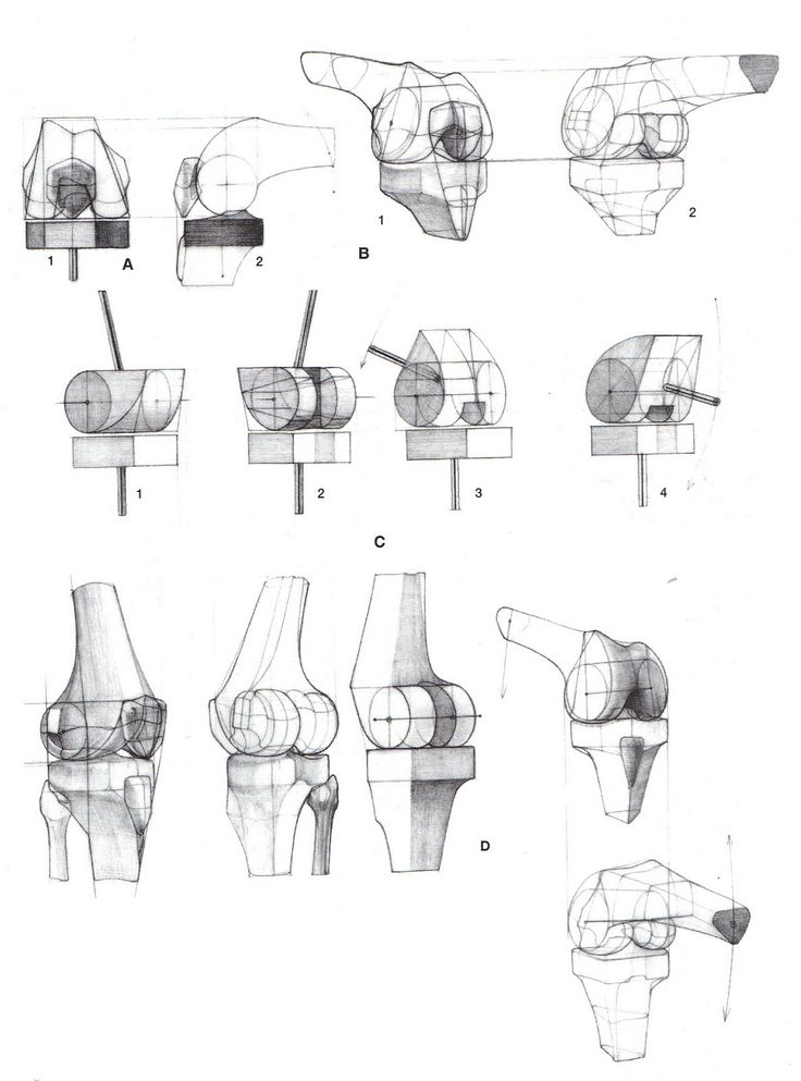 22 best Artistic Anatomies images on Pinterest | Anatomy, Artistic ...