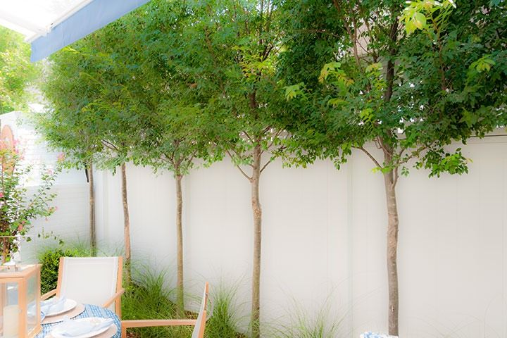 Small trees planted along the private garden fence of the for Ideal trees for small gardens