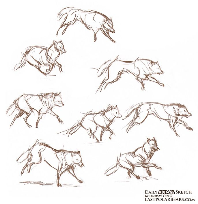 daily animal sketch wolves and caribou last of the polar bears