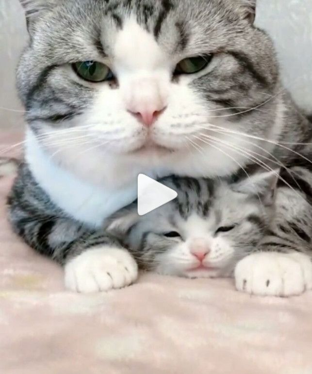 Omg Look At That Little One So Cute And Adorable With Images Cute Baby Animals Cute Cats And Kittens Cute Animal Videos