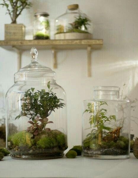 terrarium ferm 2 aquascape terrarium pinterest terrarium. Black Bedroom Furniture Sets. Home Design Ideas
