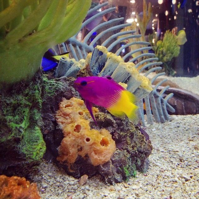 Cute colourful fish at Toronto Aquarium