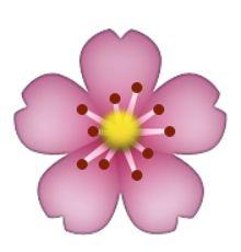 fleurs de cerisier                                                                                                                                                     Plus