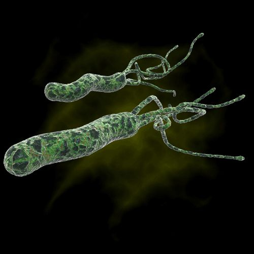how to tell if you have h pylori
